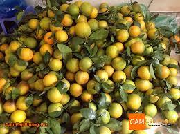 Cam Cao Phong 1 1493171259666